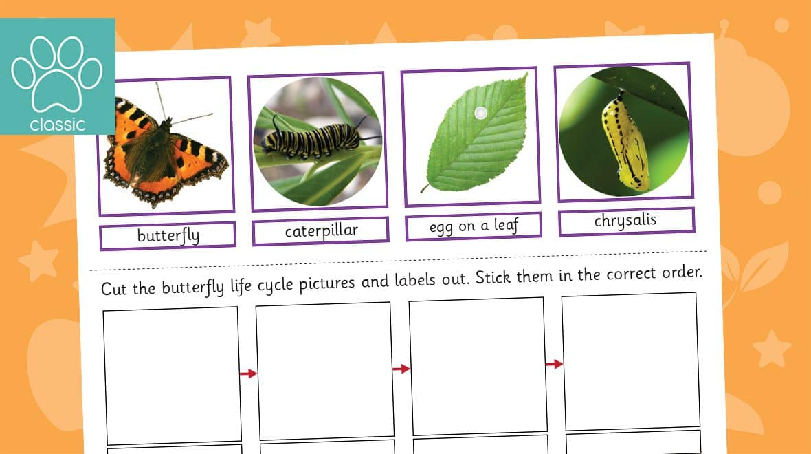 butterfly life cycle sorting activity