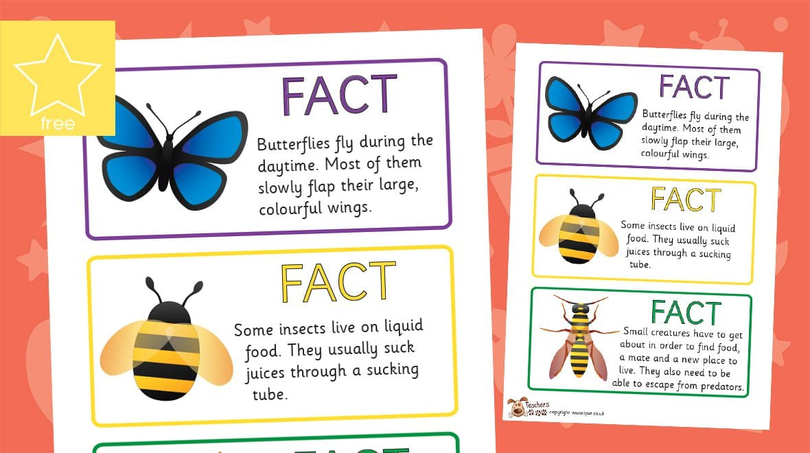 minibeast fact cards