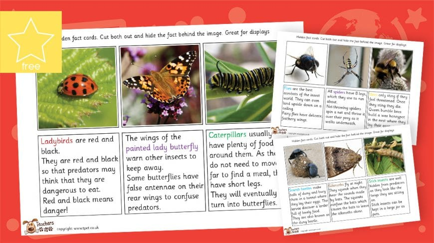 minibeast photo fact cards