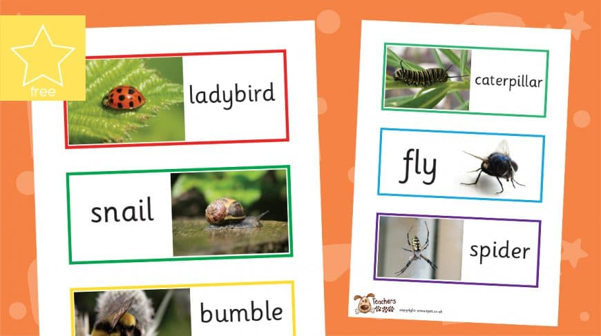 minibeast photo labels