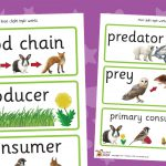 Food Chain Labels