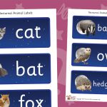 Nocturnal Animals Labels