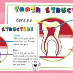 Teeth Structure Posters