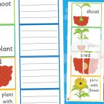 Plant Growth – Sort and Explain