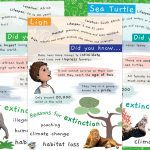 Fact Posters – Frankie's Favourite Animals