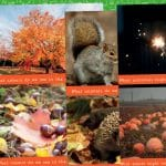 Autumn Photo Pack Discussion Cards
