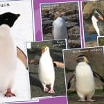 Penguin Photo Pack