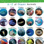 World Oceans Day – A-Z of Ocean Animals A4 Mat