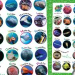 World Oceans Day – A-Z of Ocean Animals A3 Poster