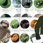 The Big Winter Walk – Wildlife Spotter Cards