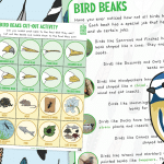 The Big Bird Watch – Bird Beaks and Sorting Activity