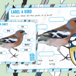 The Big Bird Watch – Label a Bird Activity and Poster