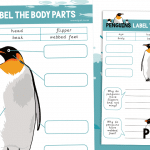 Penguins Label the Penguin Body Parts
