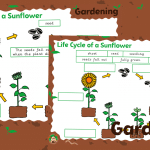 Plants Life Cycle of a Sunflower