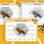 Label a Bee Activity