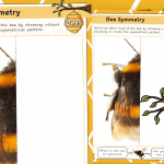 Bee Symmetry Drawing Activity