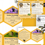 Bee Fact Cards and Display Honeycombs