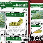 Life Cycle of a Caterpillar to Butterfly Sequencing Cards