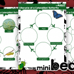 Life Cycle of a Caterpillar to Butterfly Poster and Recording Activity