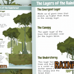 Layers of The Rainforest Information Text