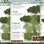Label The Layers of The Rainforest