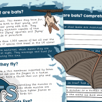 What are Bats? Comprehension