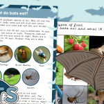 What Do Bats Eat? Information Text and Sorting Game