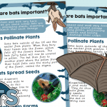 Why are Bats Important? Information Sheet
